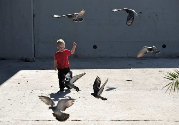 Miles Elder, 2, chases after birds as he feeds them stale bread at Hart Park in Orange on Monday.
